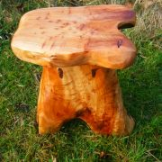 root stool d