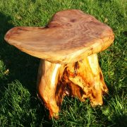 tree root stool 1