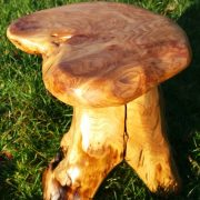 tree root stool 4